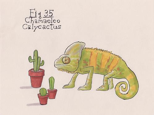Fig. 35 Chamaelo Calycactus (Original)