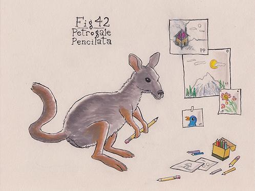Fig. 42 Petrogale Pencilata (Original)