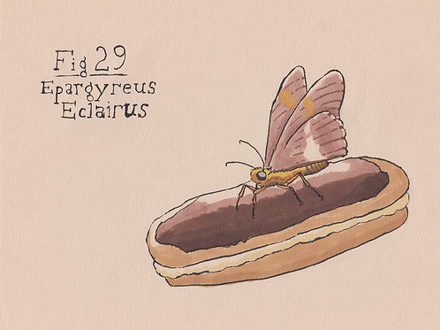 Fig. 29 Epargyreus Eclairus (Original)