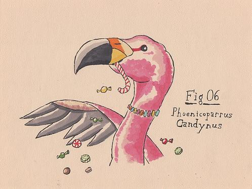 Fig. 06 Phoenicoparrus Candynus (Original)