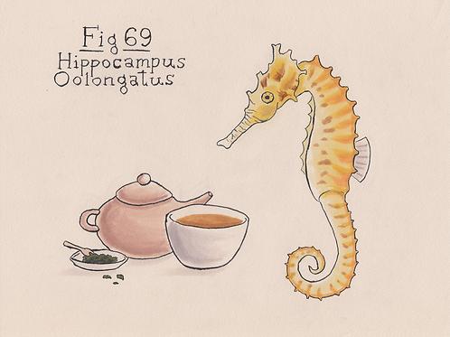 Fig. 69 Hippocampus Oolongatus (Original)