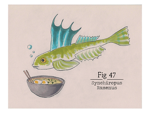 Fig. 47 Synchiropus Ramenus (Print)