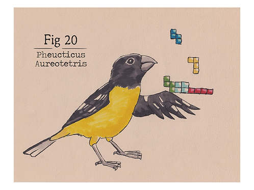 Fig. 20 Pheucticus Aureotetris (Print)