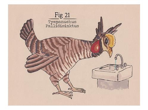 Fig. 21 Tympanuchus Pallidisinktus (Print)
