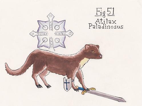 Fig. 51 Atilax Paladinosus (Original)
