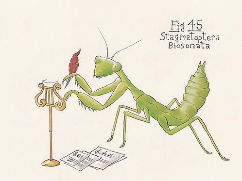 Fig. 45 Stagmatoptera Biosonata (Original)