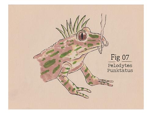 Fig. 07 Pelodytes Punktatus (Print)