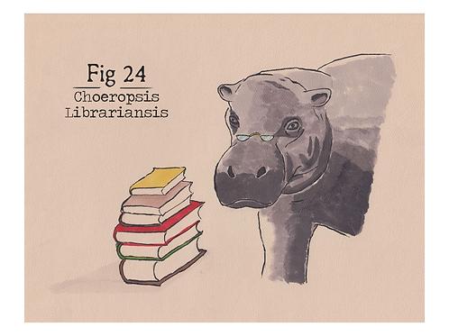 Fig. 24 Choeropsis Librariansis (Print)