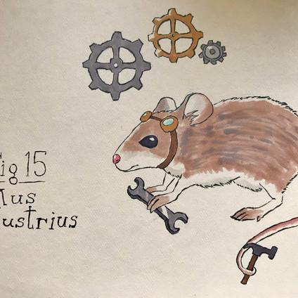 Sermonibus Animalis 15