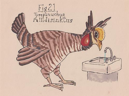 Fig. 21 Tympanuchus Pallidisinktus (Original)