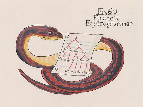 Fig. 60 Farancia Erytrogrammar (Original)