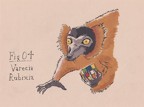 Fig. 04 Varecia Rubixia (Original)