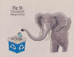 SA 50.jpg