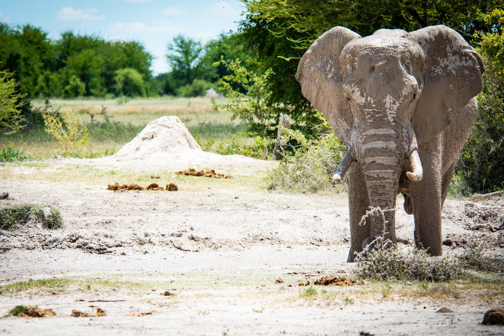 Makgadikgadi National Park Botswana