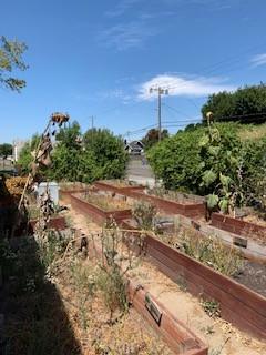 Ripon El Garden Revitalization