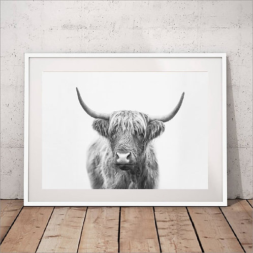 Highland Cow Canvas Painting Print