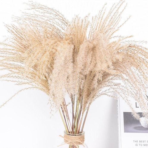 Dried Small Pampas Grass