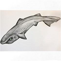 12/365 Leafscale Gulper Shark