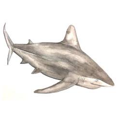 13/365 Sandbar Shark