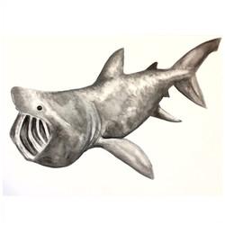 18/365 Basking Shark