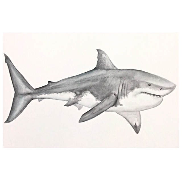 14/365 Great White Shark