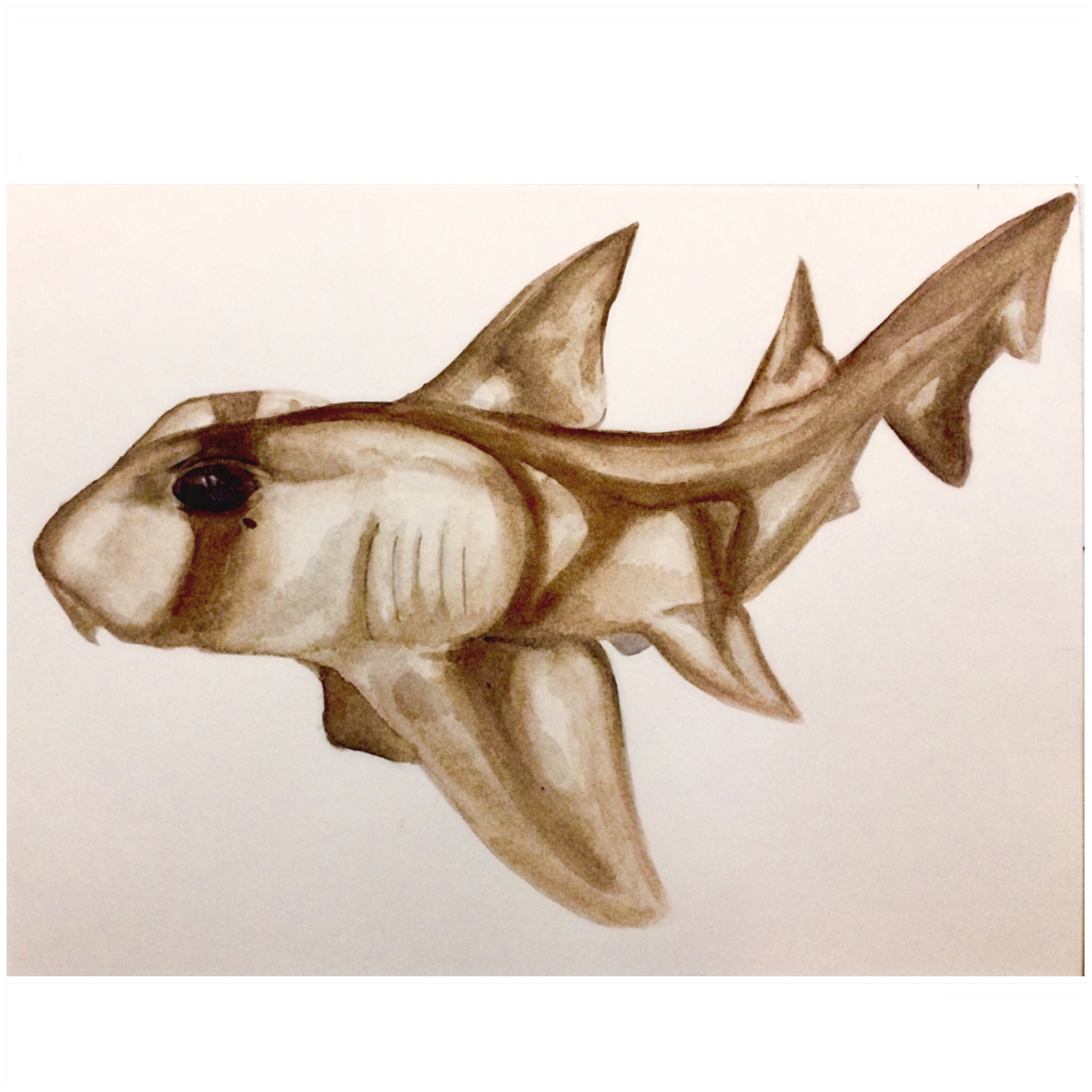 19/365 Port Jackson Shark