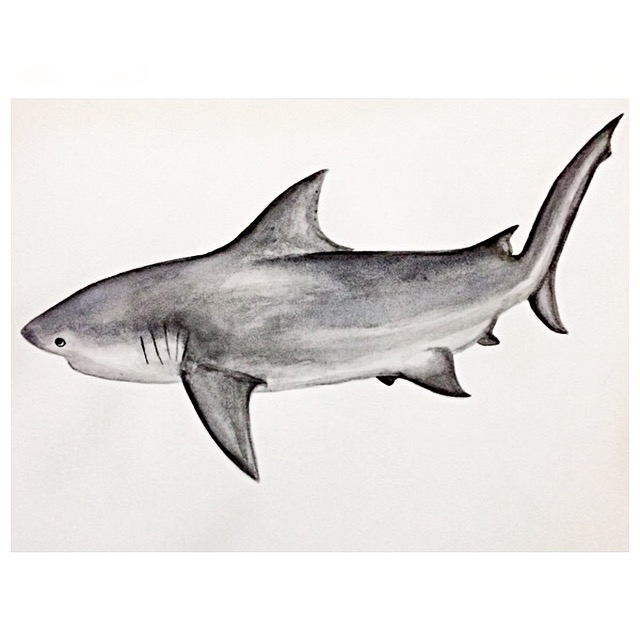 16/365 Bull Shark