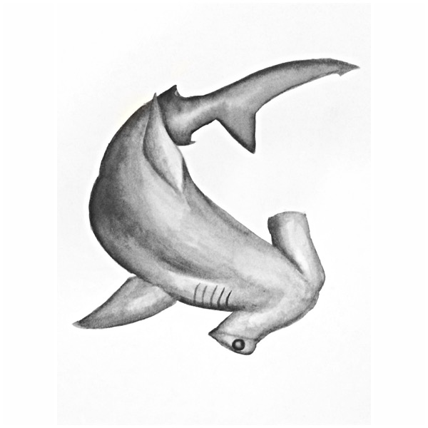 11/365 Great Hammerhead Shark