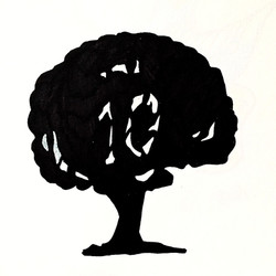 Ten Year Oak