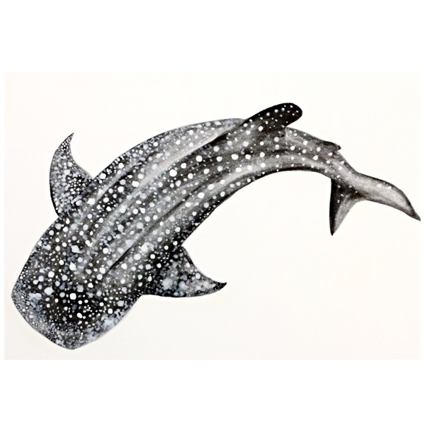 15/365 Whale Shark