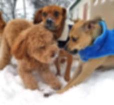 doggie daycare, kennel in Mishawaka