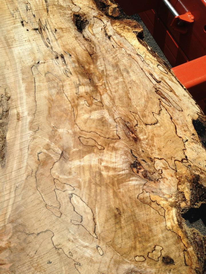 Spalted Sycamore in Colorado.