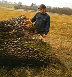 Giant log in Wisconsin.