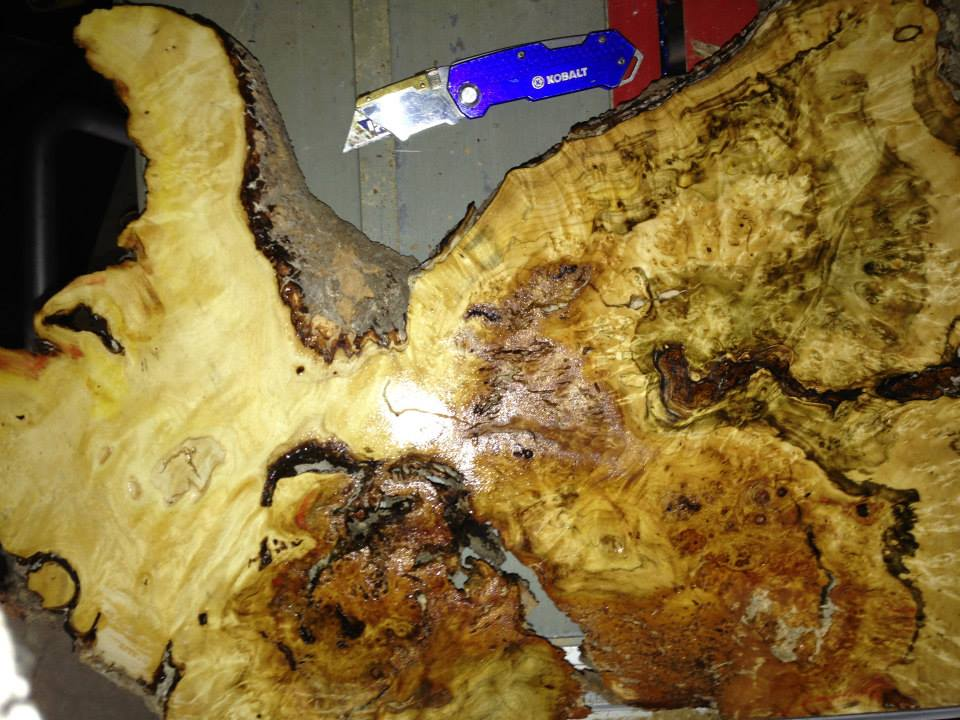 Box Elder burl