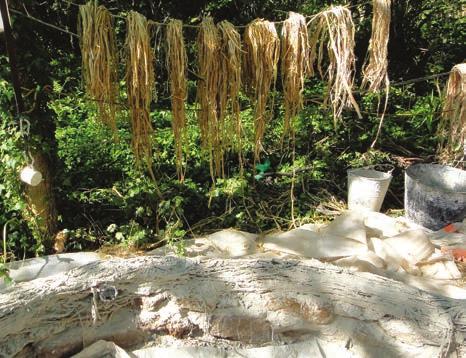 Les fibres de chanvre en train de sècher au soleil avant d'être employées.