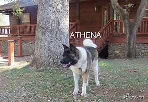 ATHENA_104-360x248.jpg