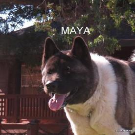 MAYA_502-367x345.jpg