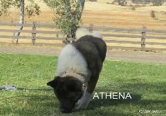 ATHENA_101-240x168.jpg