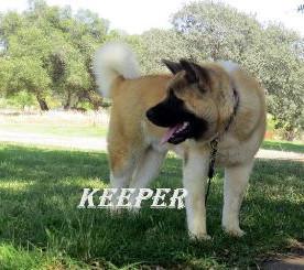 KEEPER_85-391x245.jpg
