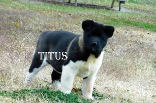 TITUS_600-316x209.jpg