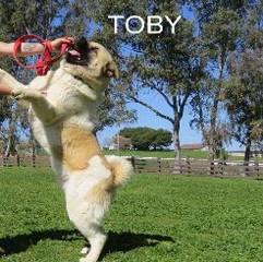 TOBY_102-246x321.jpg