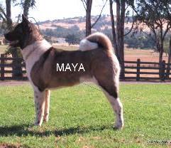 MAYA_505-265x208.jpg