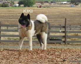 KIKI_5042-315x217.jpg