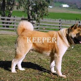 KEEPER_83-382x283.jpg