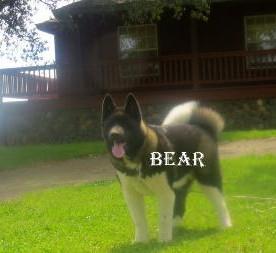 BEAR_7-382x253.jpg