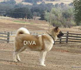 DIVA_100-315x240.jpg