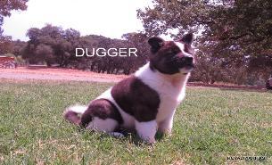 DUGGER_154-305x185
