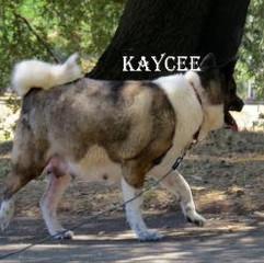 KAYCEE_501-408x247.jpg