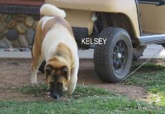 KELSEY_102-240x166.jpg