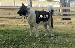OREO_502-261x170.jpg